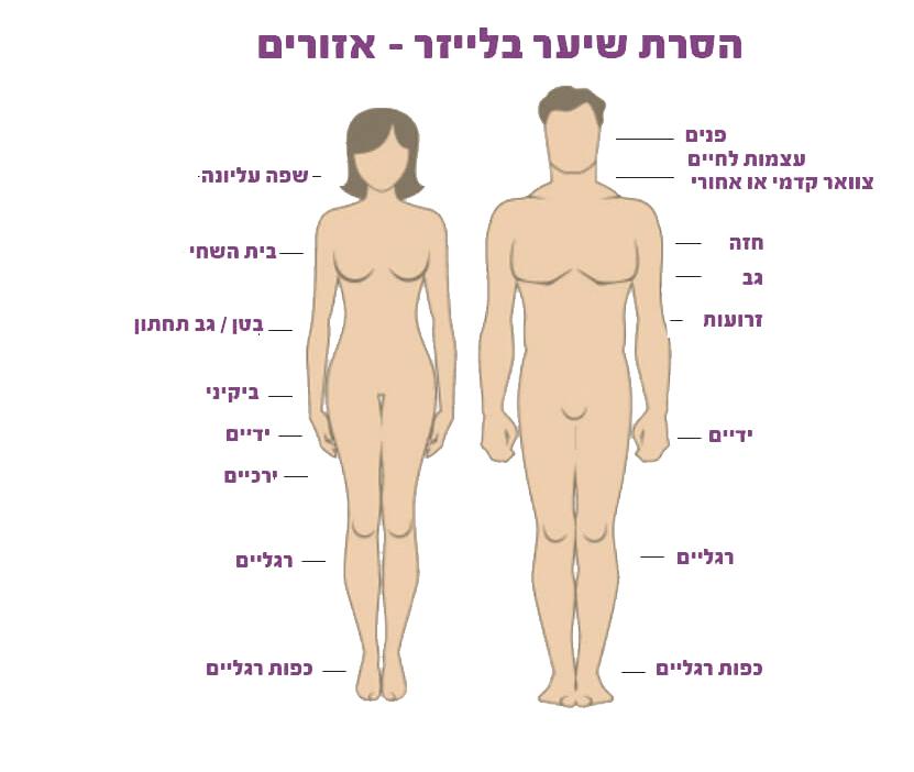 הסרת שיער בלייזר אזורים לגברים ונשים פרופורציה